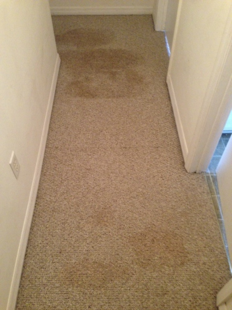 carpet cleaning results hallway before