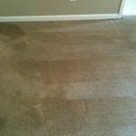 moldy carpet after