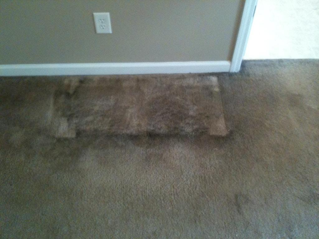 moldy carpet before
