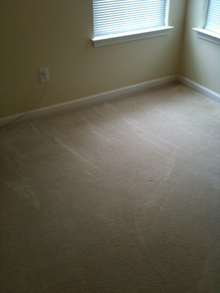 nasty carpet stains after