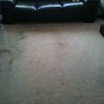pet-stains-carpet-cleaning-01-before